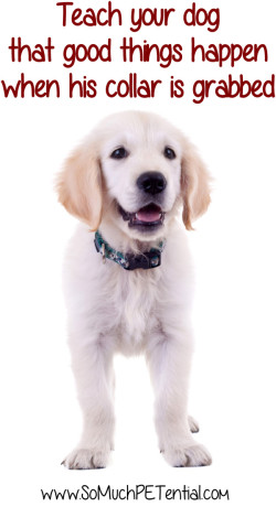 dog training - teach your dog positive association with having his collar grabbed