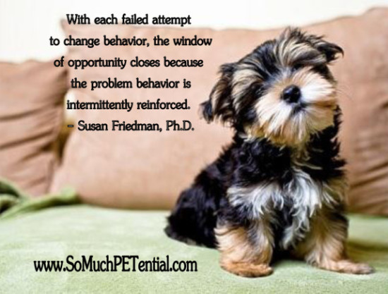 intermittent reinforcement in dog training