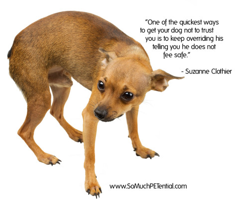 dog quote by Suzanne Clothier