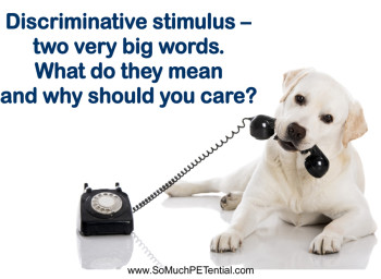 Why Is Discriminative Stimulus Important In Dog Training?