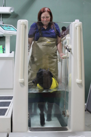 Underwater Treadmill Is Great Therapy For Dogs
