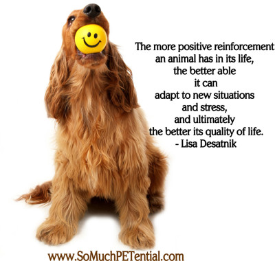 benefits of using positive reinforcement in dog training by Lisa Desatnik