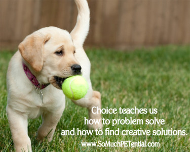 Dog training with positive reinforcement using choice
