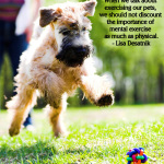 importance of giving dogs and other pets mental exercise