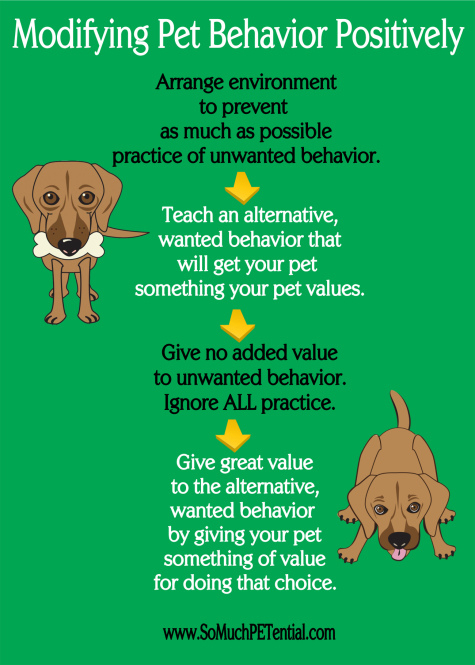 four steps to solving dog and other pet behavior problems