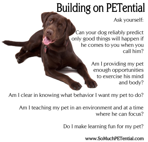 dog training tips with positive reinforcement by Lisa Desatnik