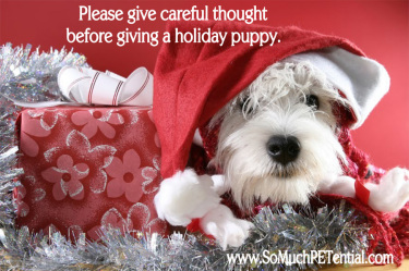 considerations before buying a Christmas puppy