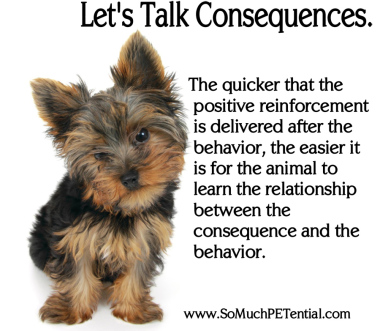 Positive Reinforcement Consequences In Dog Training