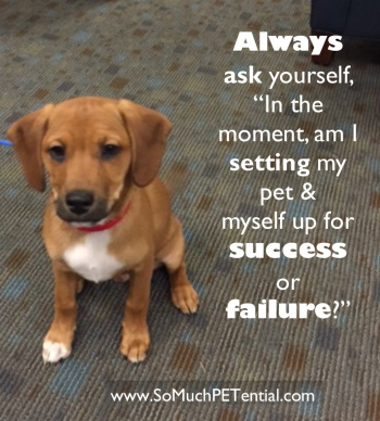 Ask Yourself – Are You Setting Your Dog Training Up For Success?