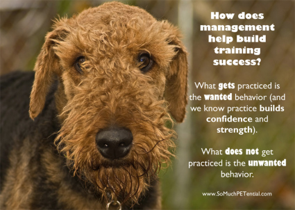 importance of management in dog and pet training success
