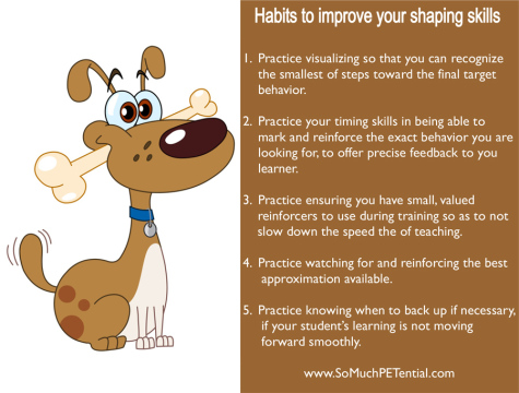 dog training tips to improve shaping