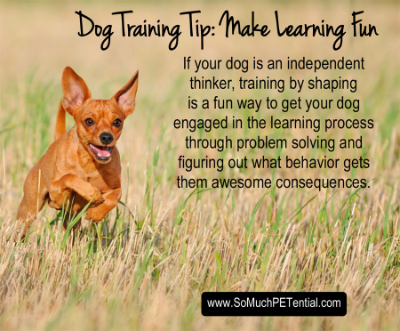 dog training tip about shaping behavior