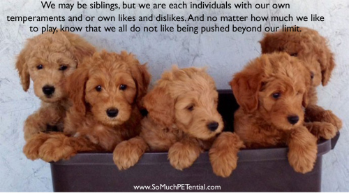 considerations before buying or adopting a puppy