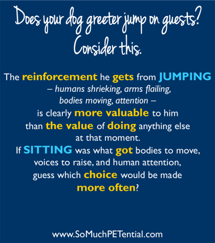 dog training tip about stopping dog from jumping on people