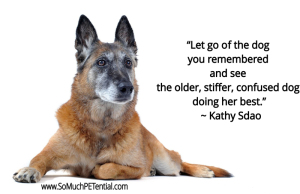 dog trainer Kathy Sdao on senior dogs and training
