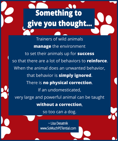 dog training tip on setting animals up for success