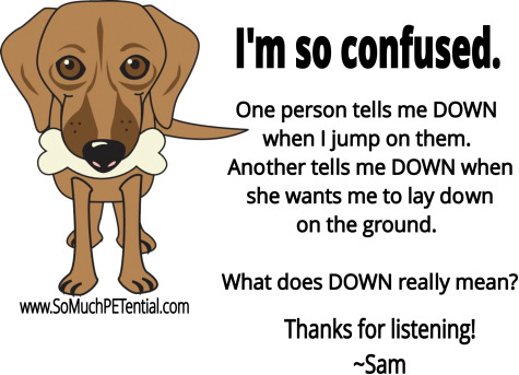 dog training tip on consistency