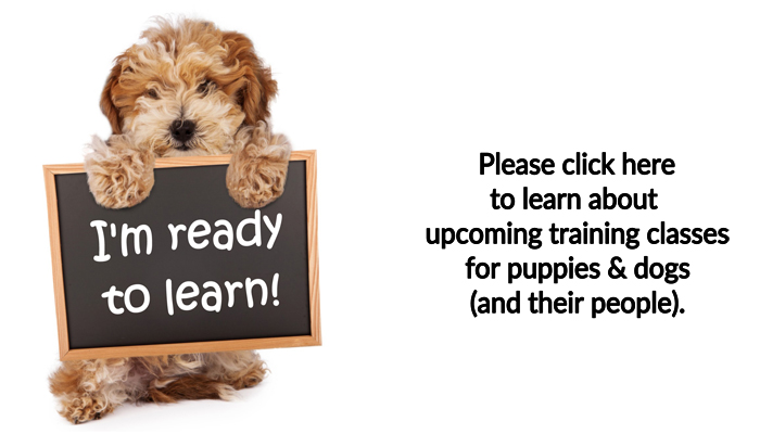Cincinnati dog and puppy training classes by dog trainer Lisa Desatnik