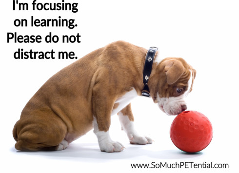 distractions in dog training