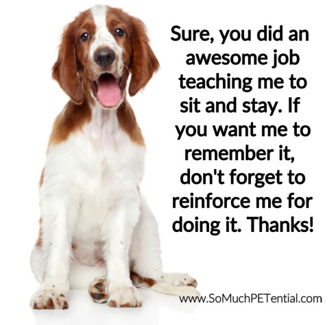 dog training tip using positive reinforcement