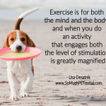 tips to exercise your dog's mind and body