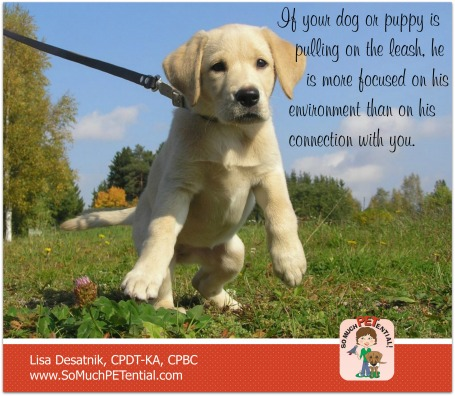 reasons why you may be having problems walking your dog with a loose leash and some tips for solving your problem by Cincinnati certified dog trainer, Lisa Desatnik, CPDT-KA