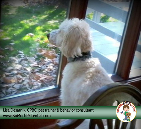 dog training tips: how to stop your dog from barking out the window