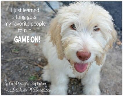 dog training tip - teaching a dog to sit by Cincinnati dog trainer Lisa Desatnik