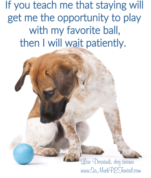 tips for teaching dog self control and waiting