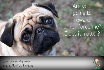 rewards vs reinforcement in dog training