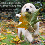 Six Tips To Use Distractions In Dog Training