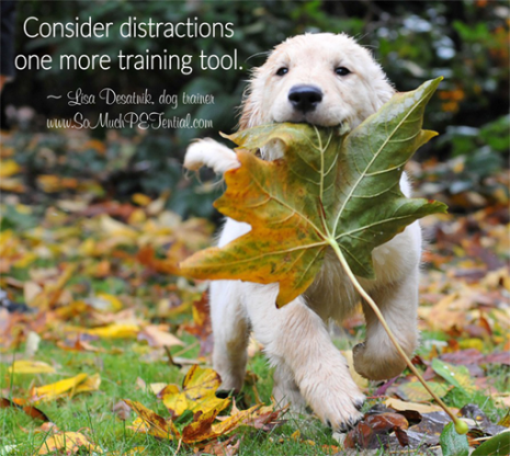 dog training tips for using distractions