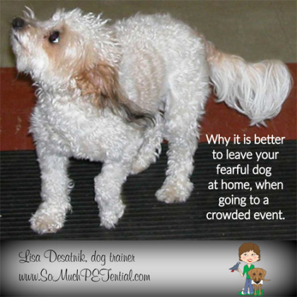 Why fearful dogs shouldn't be taken to crowded places.