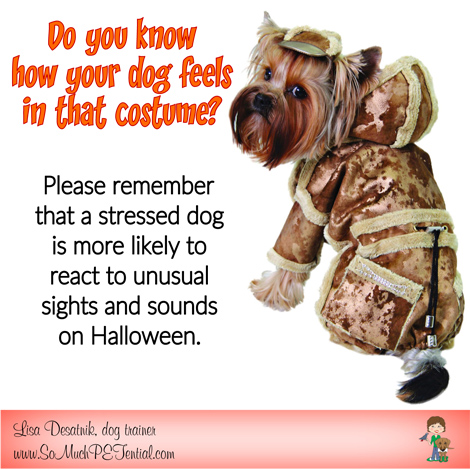 Should dogs wear Halloween costumes?