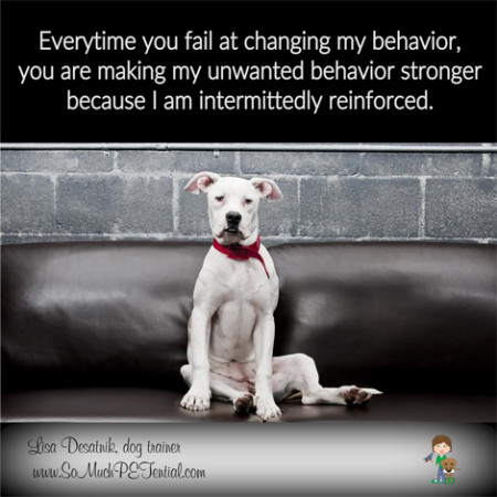 Tips for solving dog and parrot problem behavior