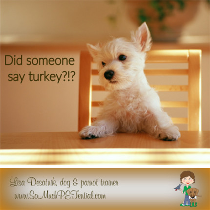 dog training tips to ensure a safe and fun Thanksgiving by Cincinnati dog trainer Lisa Desatnik