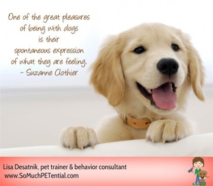 Dog Trainer Suzanne Clothier reminds us that dogs live in the moment