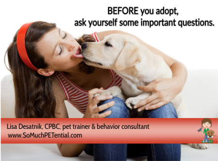 questions to ask yourself before adopting a dog or puppy