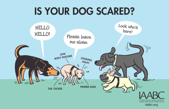 How to know if your dog is scared at a dog park