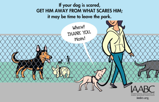 What to do if your do is scared at a dog park