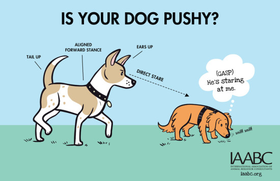 How to know if your dog is being pushy at a dog park