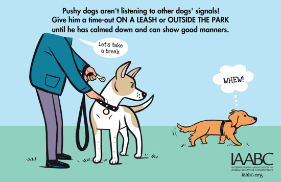 What to do if your dog is being pushy at a dog park