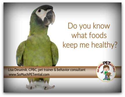 what food should you feed your pet psittacine bird?