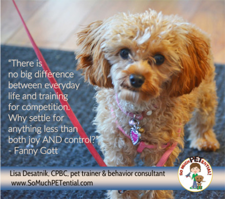 In a dog training workshop, instructor Fanny Gott reminded us, that self control is driven by the dog's choice.