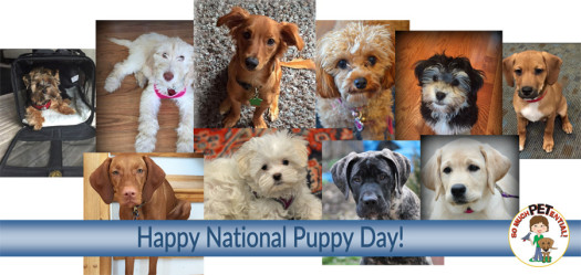 Happy National Puppy Day! These are some of the faces I have gotten to know through my dog training.