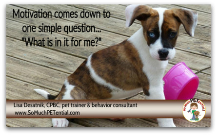 motivation is an important factor in dog training success