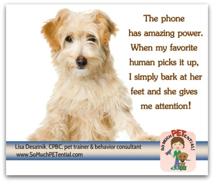 Dog training tips for stopping your dog from barking when you are on the telephone by Cincinnati dog trainer Lisa Desatnik.