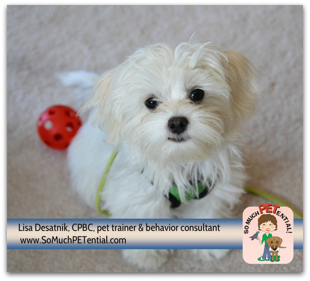 tips for preventing puppy behavior problems