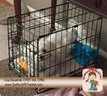 In puppy training, a crate is helpful for housetraining, teaching how to settle, and separation