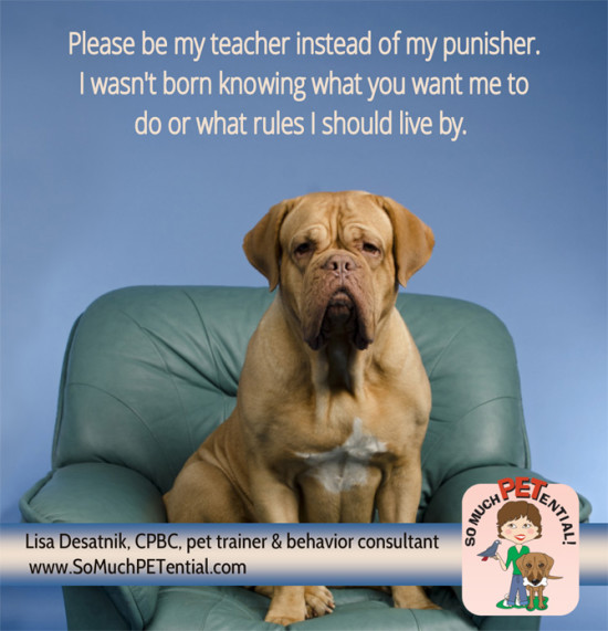 Instead of using punishment to train your dog, use positive reinforcement and you will see more of the behaviors you want to see.